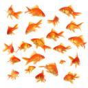 Les petits pois sont rouges…