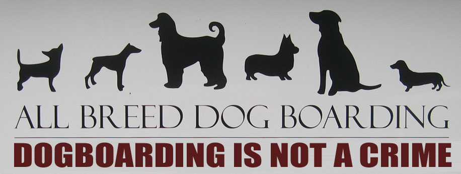 Dogboarding is not a crime