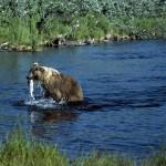 Pêcheur bourré comme un ours