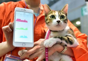 Smartphone pour chat
