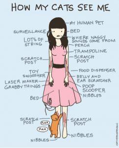 Comment un chat voit un humain