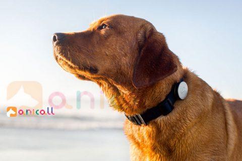 Comprendre le langage des chiens et chats